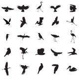 fågelillustrationer Arkivfoton