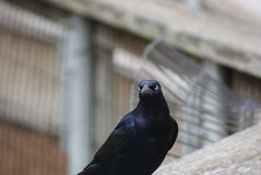 Fågelilsken blick Royaltyfri Bild