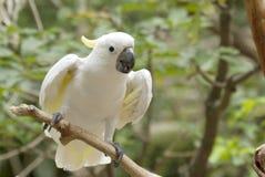 fågelkakadua Fotografering för Bildbyråer