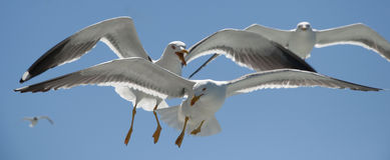 Fågelkonkurrens Arkivfoton