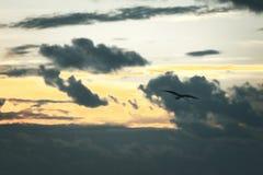 Fågelkonturflyg till och med solnedgångmoln royaltyfri fotografi
