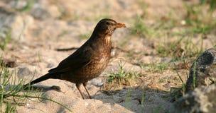 fågelkryp Royaltyfri Foto