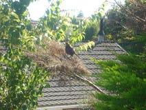 Fågelkuggfråga Arkivfoto