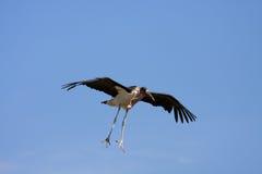 fågellivstid Royaltyfri Fotografi