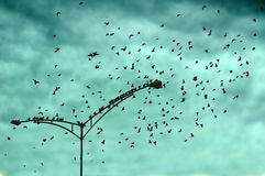 Fågelljus på lampstolpen Arkivfoton
