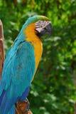 fågelmacaw Arkivfoton