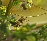 Fågelmamman ordnar redet Royaltyfri Fotografi