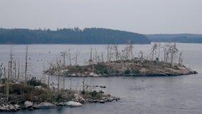 Fågelmarknad på en ö i Nordsjö stock video