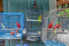 Fågelmarknaden, Yogyakarta, Java, Indonesien Arkivfoton
