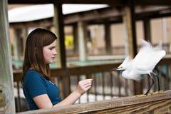 fågelmatning Fotografering för Bildbyråer