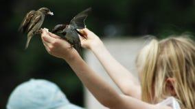 fågelmatning Arkivbild