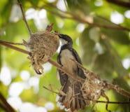 Fågelmatning behandla som ett barn fåglar Arkivfoto