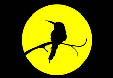 fågelmoonvektor Royaltyfri Foto
