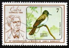 FågelMyiarchus sagrae Stora Bobito, serie`en den 90th årsdagen av döden av Juan C Gundlach `-ornitolog, circa 1986 Fotografering för Bildbyråer
