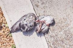Fågeln återstår Fotografering för Bildbyråer