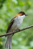 Fågeln  Royaltyfria Foton