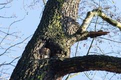 Fågeln av rovet under dag Royaltyfria Bilder