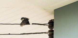 Fågeln börjar till att flyga arkivfoto