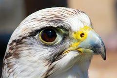 fågeln ber Royaltyfria Foton
