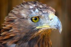 fågeln ber Royaltyfri Foto