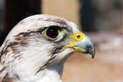 fågeln ber Royaltyfria Bilder