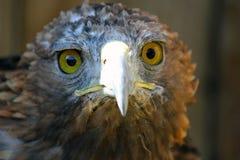 fågeln ber Arkivfoton