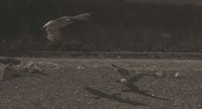 fågeln ber Arkivbilder