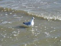Fågeln bevattnar på Arkivbilder