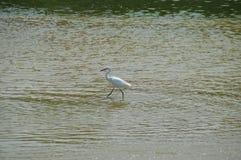 Fågeln bevattnar på Arkivbild