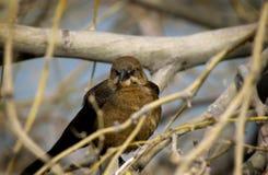 fågeln branches wild Arkivbild