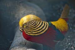 fågeln färgade royaltyfria foton