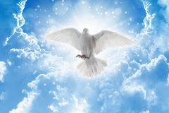 Fågeln för den heliga anden flyger i himlar, ljusa ljusa sken från himmel royaltyfri foto