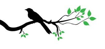 Fågeln förgrena sig på vektor illustrationer