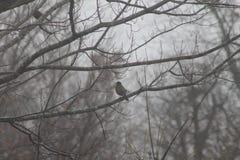 Fågeln förgrena sig på Royaltyfria Bilder
