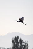 fågeln frigör Royaltyfria Bilder