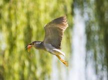 Fågeln i dammet Royaltyfri Foto