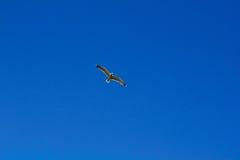Fågeln i himlen royaltyfria foton