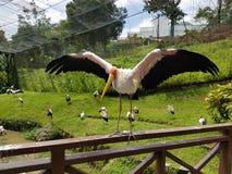 Fågeln i parkera Fotografering för Bildbyråer