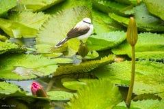 Fågeln i regnet Arkivbild