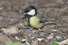 Fågeln i skogen arkivbilder
