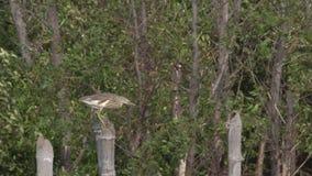 Fågeln kämpar med vinden arkivfilmer