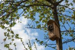 Fågeln kom med någon mat Royaltyfria Foton