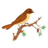 Fågeln på en filial av sörjer julbevekelsegrundvektorn Arkivfoton