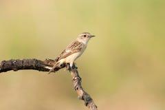 Fågeln på pinnen Royaltyfri Foto
