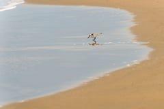Fågeln på stranden Royaltyfri Foto