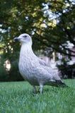 Fågeln parkerar in med suddig bakgrund Arkivfoton