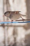 Fågeln poserar Arkivbilder