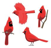 Fågeln poserar den nordliga kardinalen Vector Illustration Royaltyfria Foton