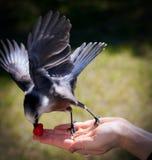 Fågeln räcker in Arkivbild