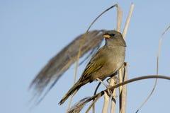 Fågeln sätta sig på en växt från plumerilloverdon Arkivfoto